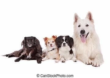 grupp, av, hundkapplöpning