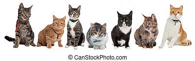 grupp, av, katter