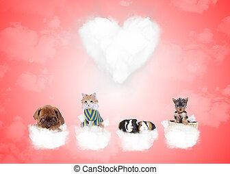 grupp, av, söt, djuren, på, kärlek, skyn