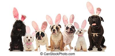grupp, av, söt, hundkapplöpning, tröttsam, påsk kanin, örn