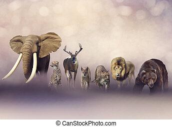 grupp, av, wild djur