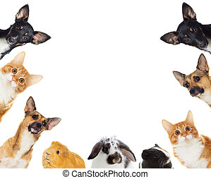grupp, Kika, Älsklingsdjur