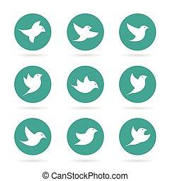 gruppe, fugl, vektor, baggrund, hvid kreds