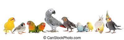 gruppe, fugle