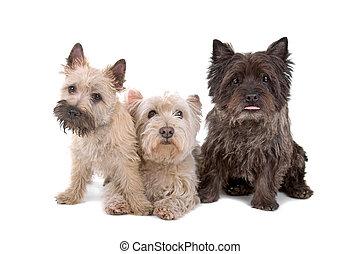 gruppe, hunden