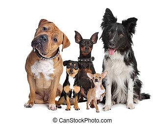 gruppe, i, fem, hunde