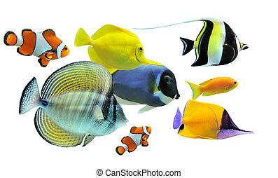 gruppe, i, fisk