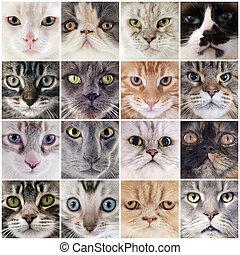 gruppe, i, katte