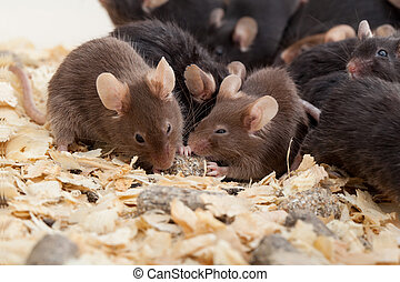 gruppe, mouses