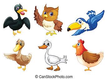 gruppe, vögel