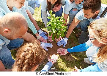 gruppe, von, freiwilligenarbeit, pflanzen baum, park