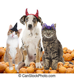gruppe, von, halloween, haustiere