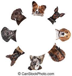 gruppe, von, hund, porträts, ungefähr, a, kreis