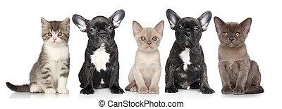 gruppe, von, hundebabys, und, babykatzen