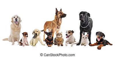gruppe, von, hundebabys, und, katzen