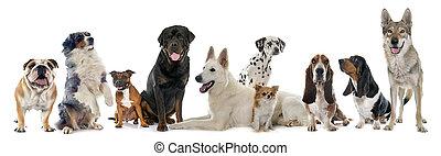 gruppe, von, hunden
