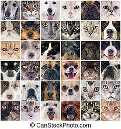 gruppe, von, hunden, und, katzen