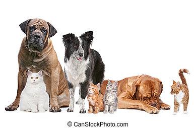 gruppe, von, katzen, und, hunden