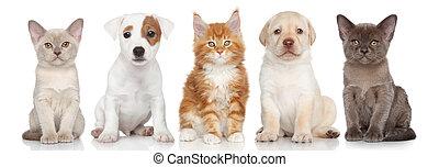 gruppe, von, klein, kã¤tzchen, und, hundebabys