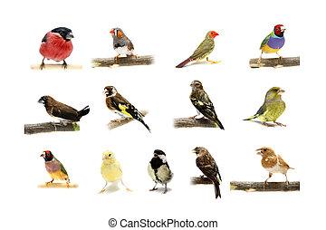 gruppe, von, klein, vögel, weiß