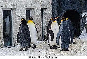 gruppe, von, pinguine, in, der, japan, zoo