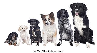 gruppe, von, sechs, verschieden, gemischter, hunden