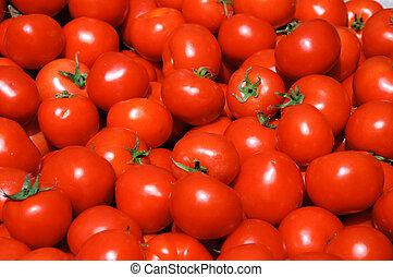 gruppe, von, tomaten