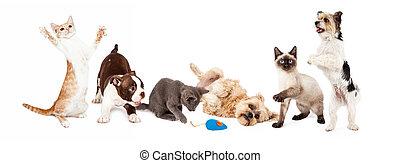 gruppe, von, verspielt, katzen, und, hunden