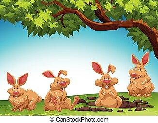 gruppo, coniglio, vangata, suolo