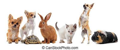 gruppo, di, animali domestici