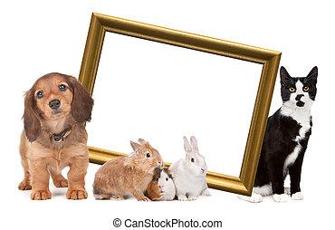 gruppo, di, animali domestici, standing, intorno, uno, dorato, cornice