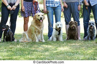 gruppo, di, cani, con, proprietari, a, obbedienza, classe