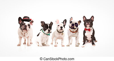 gruppo, di, cinque, adorabile, bulldog francesi