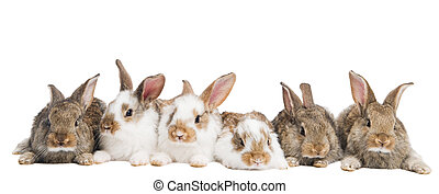 gruppo, di, conigli, fila