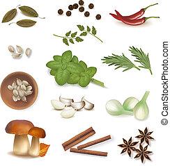 gruppo, spices., vector.