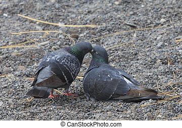 grus, affodringen, due, en anden, æn