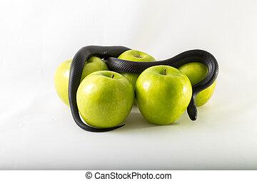 grzech, wąż, jabłko