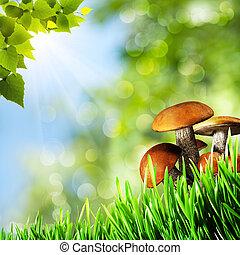 grzyby, tła, abstrakcyjny, naturalne piękno