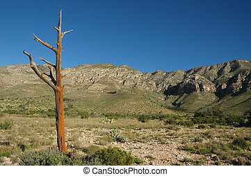 Guadalupe Mountains - A dead tree stands in the foreground...