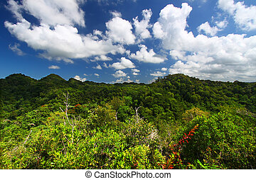 Dense vegetation of Guajataca Forest Reserve in Puerto Rico.