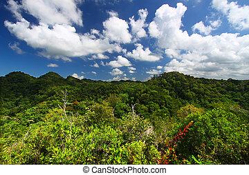 Guajataca Forest Reserve - Puerto Rico - Dense vegetation of...