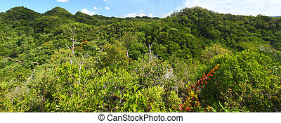 Guajataca Forest Reserve - Puerto Rico