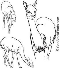Guanaco llama - The contour black-and-white image of the...
