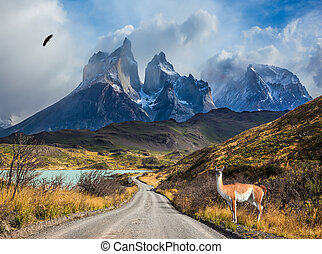 Guanaco on the lake Pehoe