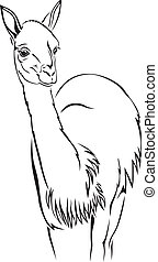 Guanaco - The contour black-and-white image of the guanaco