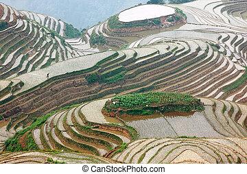 guangxi, terrasses, longji, porcelaine, riz, province