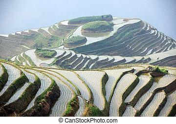 guangxi, terrazas, longji, china, arroz, provincia