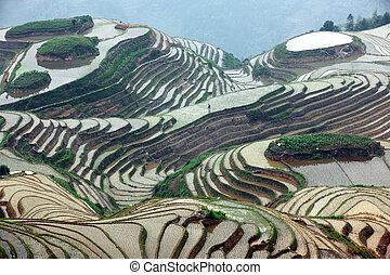 guangxi, terrazzi, longji, porcellana, riso, provincia