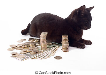Guard - Black cat like guard of money, focus on coin money...