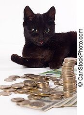 Guard - Black cat like guard of money, focus on eye of cat